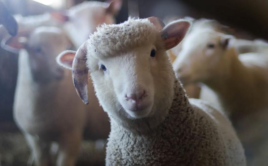 2021年十二星座爱情分析:白羊座6月爱情如何?