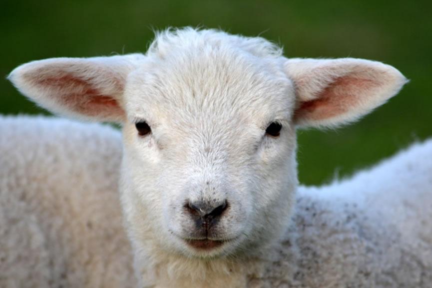 2021年十二星座事业运势分析:白羊座6月事业运势如何?