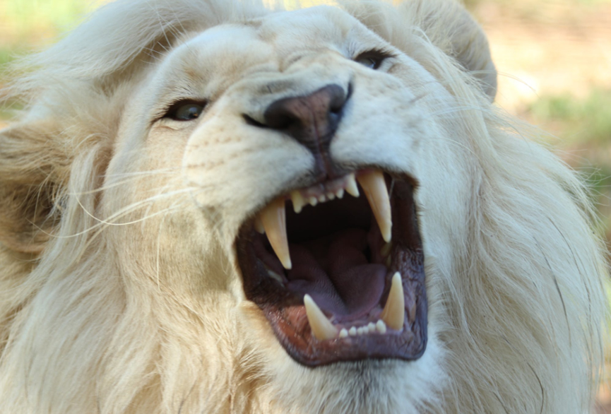 2021星座测算:爱情中,为什么狮子座就像一匹野马很难驯服!